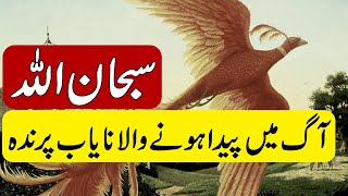 ALLAH KI QUDRAT | FIRE BIRD | FIRE PHOENIX | MYSTERY OF  FIRE BIRD | JALNAY WALA PARINDA | KHOJI