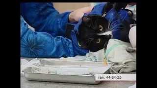 Братские ветеринары поставят домашним животным бесплатные прививки