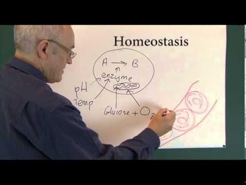 Homeostasis 1, Physiological Principles
