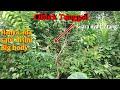 Mikat Burung Ciblek Tunggal Suara Lantang Menggunakan Kutilang Ribut Saka I S Channel  Mp3 - Mp4 Download