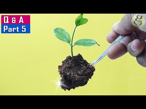 5 USEFUL GARDENING IDEAS AND SECRET QUESTIONS ANSWERED   Garden Tips