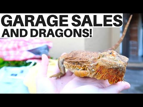 Yard Sale & Thrift Store Haul w/ The College Picker! ...also dragons 🐉 | RALLI ROOTS s2.e5