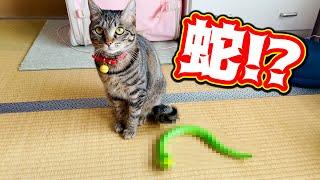 元野良猫が初めてヘビを見たときの反応がこちらw Kitten Cat Japanese traditional house