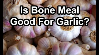 Garlic and Bone Meal Harvest Results