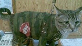 АРМИЯ ПРИКОЛЫ 2017.СМЕШНО до СЛЕЗ.CRAZY RUSSIAN ARMY.