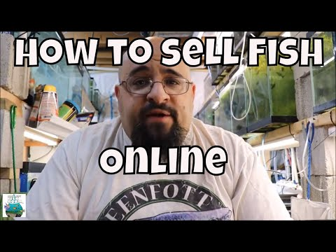 How To Sell Fish On Line ***Breeding For Profit***