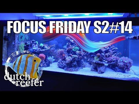 FF S2#14 | Creating Optimal Flow in a Reef Tank
