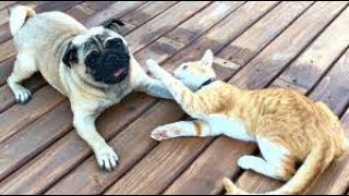Funny Dog Cat Comedy Video - Cute Dogs and Cats Doing Funny Things 2019 #11 | JOJO PET