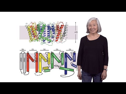 Lily Jan (UCSF / HHMI) 1: Introduction To Ion Channels: The Role And Function Of Potassium Channels