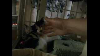 家猫修行中、人の手に慣れようね