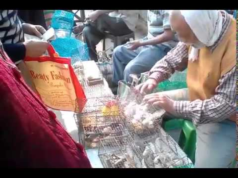 #Funny - Bird Seller Gets Confused Counting His Birds At Galiff Street