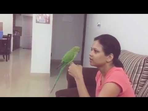 Funny Indian parrot Talking video | Interesting Arguement