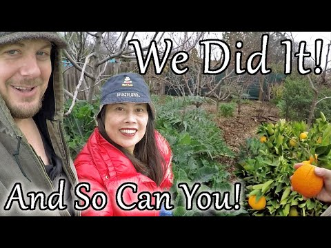 Plant Abundance Winter Permaculture Backyard Food Forest Garden Tour (Year 9)