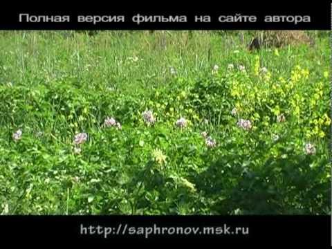 видео: Огород (картофель в соломе) в родовом поместье. 4 часть