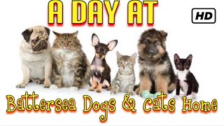 A day at Battersea Dogs & Cats home
