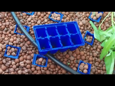 Starting seeds directly in Aquaponics Unit