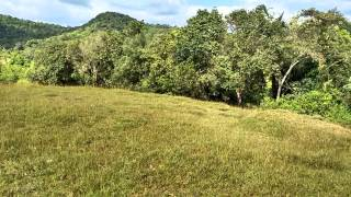 30 ACRE LAND FOR SALE - SAKLESHPURA