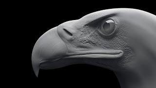 Eagle 3ds max modeling Tıme-lapse / 3DS max Моделирование орла