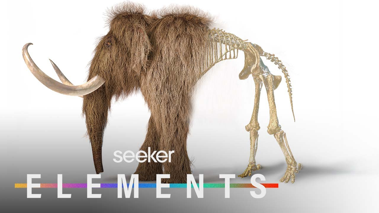 The Wild Plan To Bring Back Woolly Mammoths