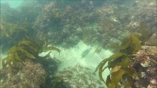 Snorkeling in Laguna Beach, Orange County.