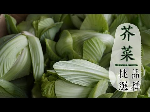 【冬】芥菜如何挑選才好吃?