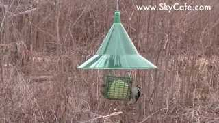 Green Squirrel Away Baffle