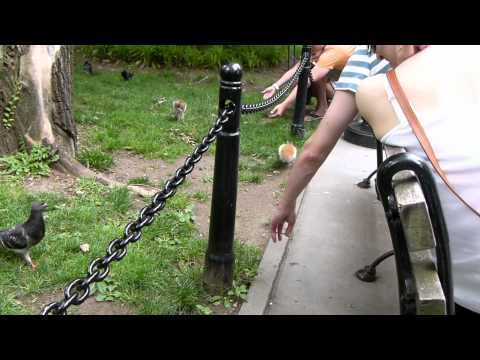 Animals at City Hall Park - New York