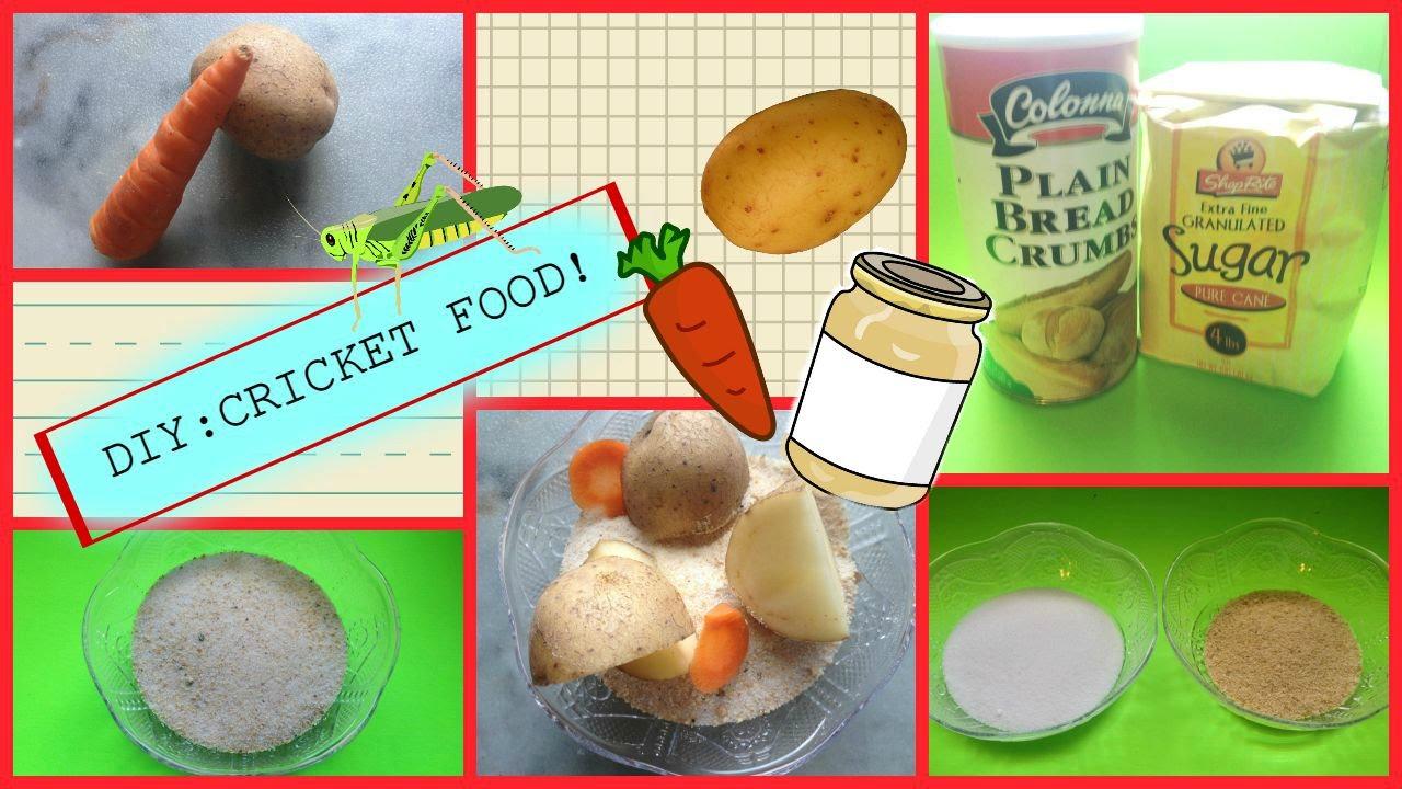 Diy cricket food recipes easy youtube diy cricket food recipes easy forumfinder Images