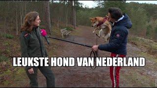 Slijptol voert actie voor Chuba, de leukste hond van Nederland