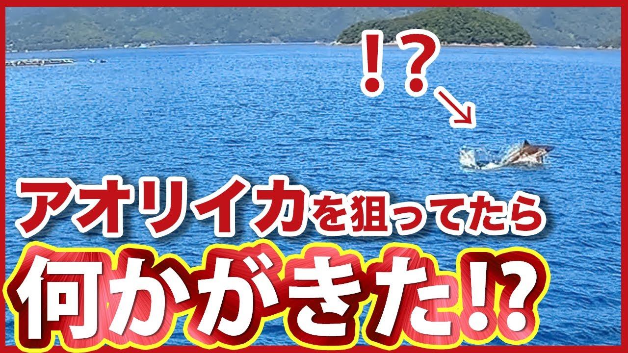 【アオリイカ】エギング&ヤエン中にとんでもない水柱が⁉/上五島でアオリイカ大爆釣!!!