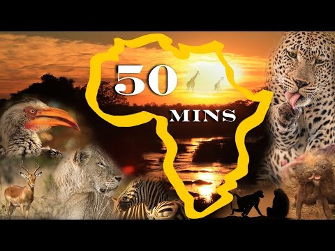 Africa's Animal Wonders COMPILATION for Family Viewing