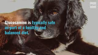 Glucosamine in  a dog's diet - benefits of using glucosamine in a dog's diet