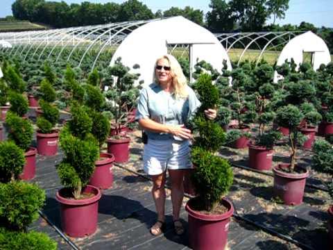 Lakeview Nurseries Topiary Garden Art