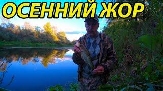 Осенний жор Рыбалка 5 сентября 2021 на поплавок