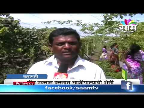 Success Story of Bitter Gourd farming by Baramati Farmer