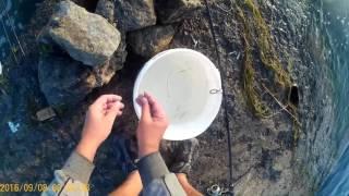 Ловим саргана в Чёрном море.(Рыбалка на саргана в Чёрном море., 2016-09-20T20:02:35.000Z)