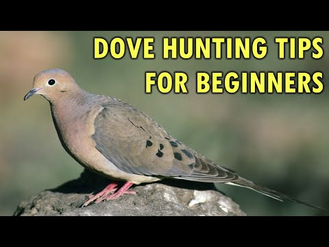 Dove Hunting Tips For Beginners | Hunting Boot Camp