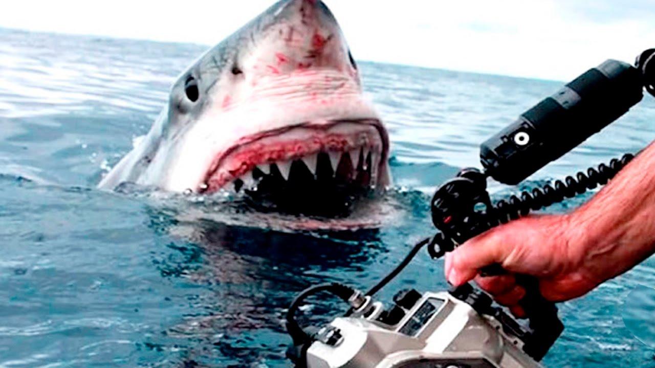 Атаки акул, снятые на видео (+9 видео)