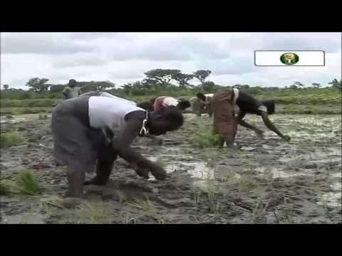 Grow Africa Debate: Transforming Africa's Agriculture Industry