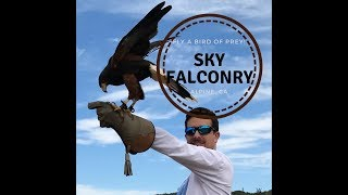 Flying Hawks at Sky Falconry Alpine, CA with Danny Hauger Travel Podcasts