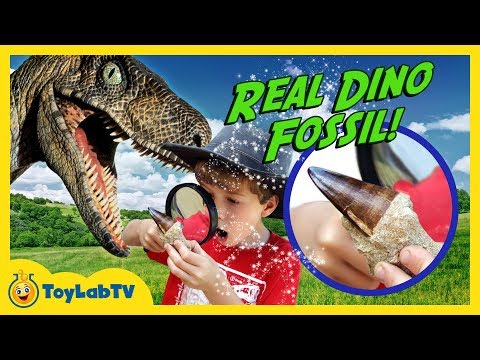 Thumbnail: Real Life Dinosaur Fossils! Jurassic Adventure Raptor Chase, Surprise Eggs & Nerf Blasters Kids Toys