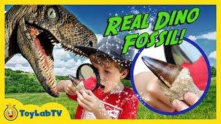 Real Life Dinosaur Fossils! Jurassic Adventure Raptor Chase, Surprise Eggs & Nerf Blasters Kids Toys