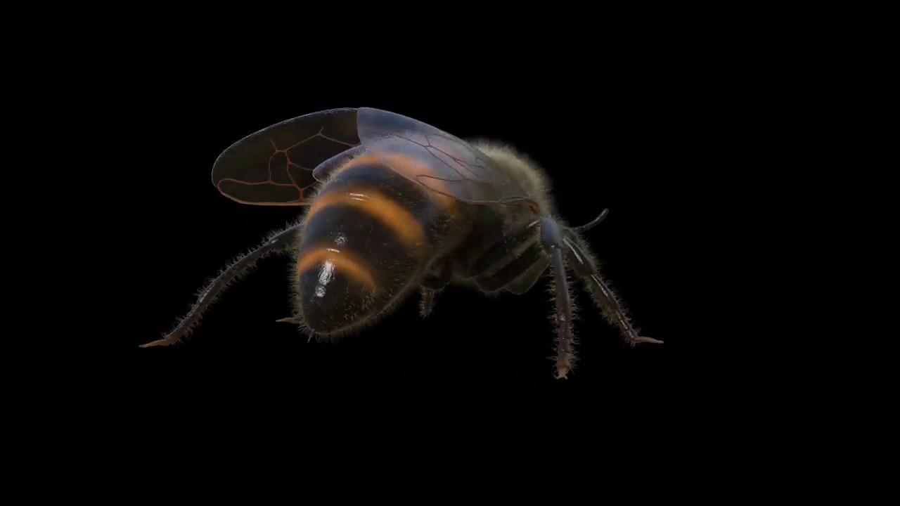 3D Honey Bee Model CGI Turntable (AVAILABLE ON TURBOSQUID)