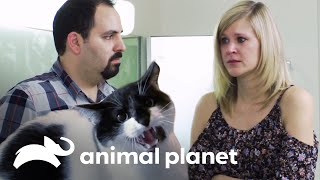 Jackson, el intermediario | Mi gato endemoniado | Animal Planet