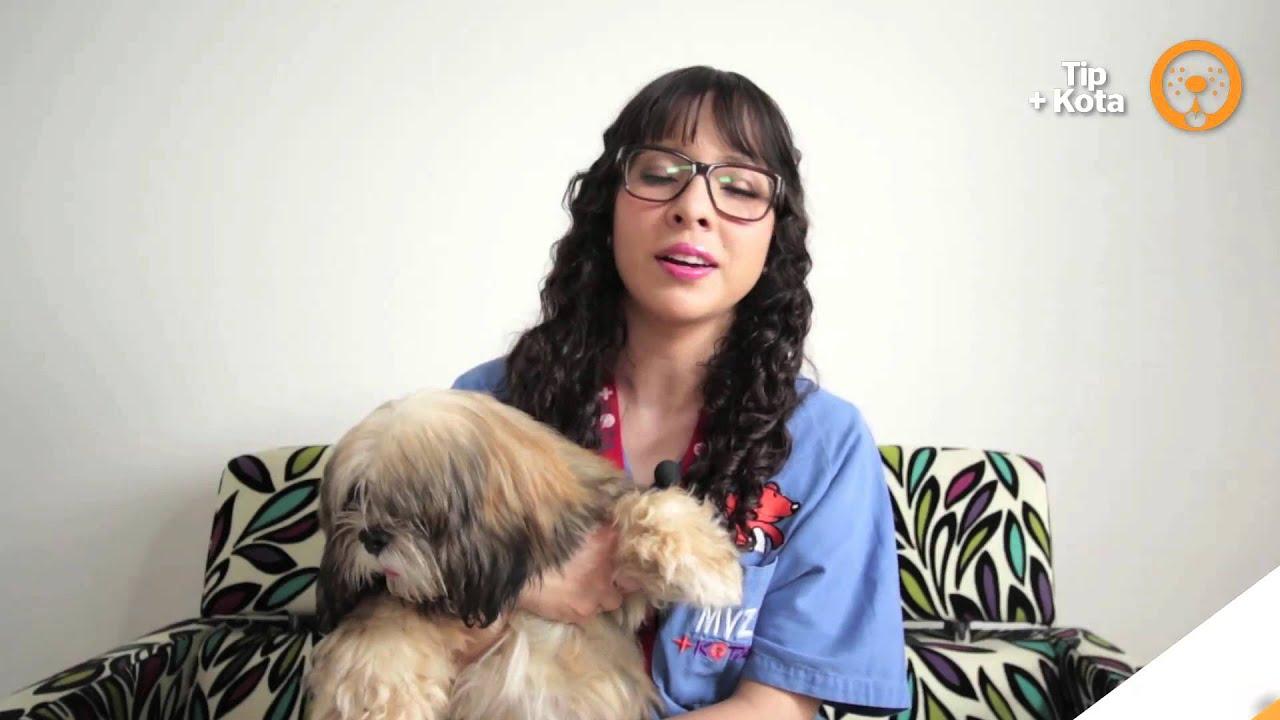 Cuidados de las mascotas: Tip +KOTA para que tu perrito aprenda a ir al baño.