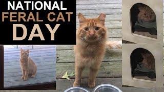 National Feral Cat Day - Cinnabon Before He Was Cinnabon