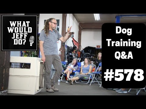 dog-training---training-dogs-recall---e-collar-dog-training---what-would-jeff-do?-q&a-ep.578-(2019)