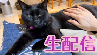 【ランチ生配信4/29】雨の日の祭日は猫でも見て過ごしませんか?生配信
