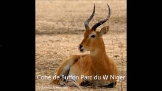 Toubal De Dosso - Gandjii Almaney (Les Animaux Sauvages)