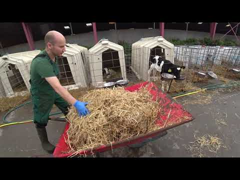 Intelligent Technology Calf Transportation Hay Silo Milk Feeding Modern Cow Farming Tractor  Automat